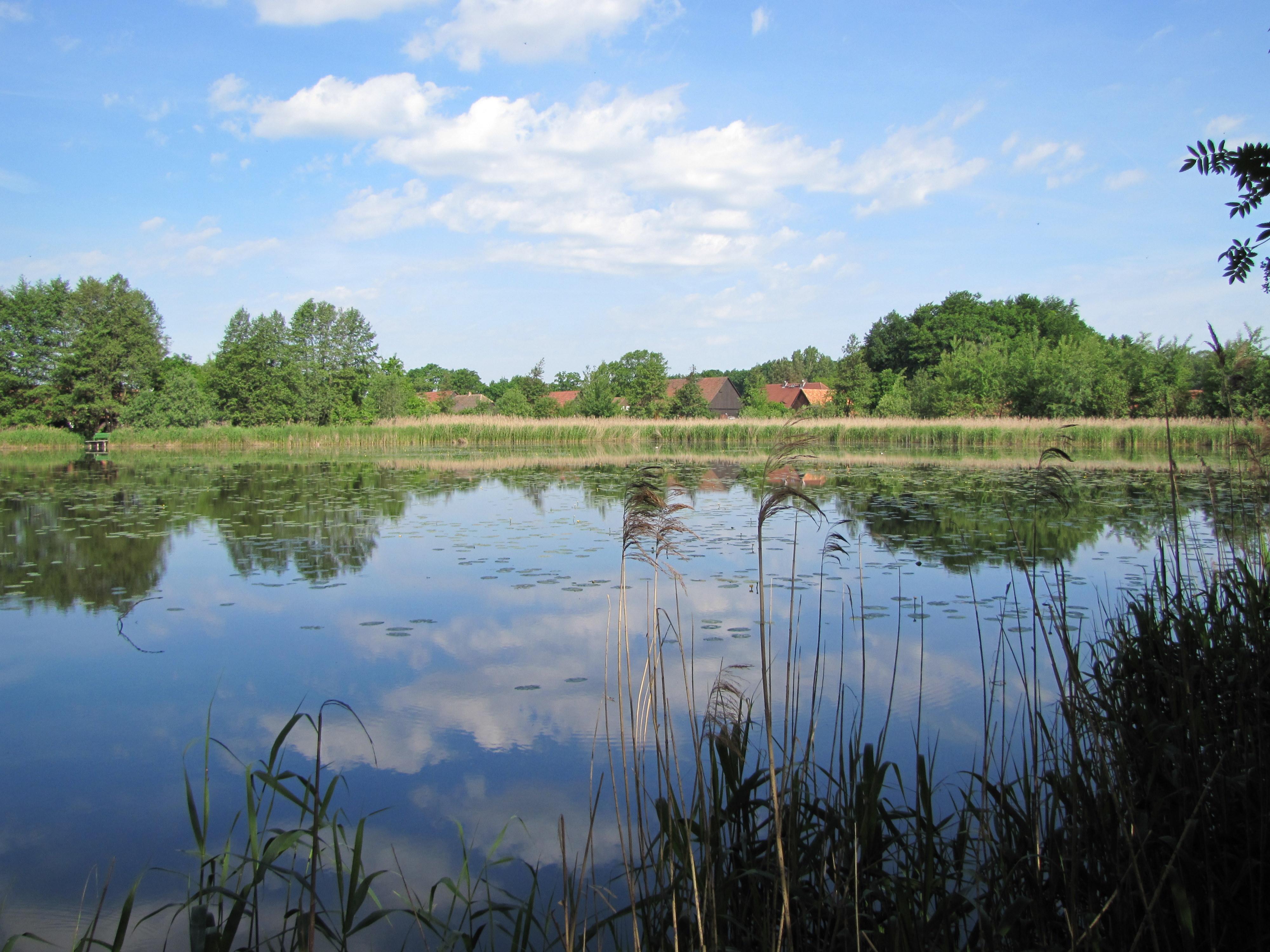 Rybník Erlichtteich